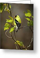 Goldfinch Suspended In Song Greeting Card