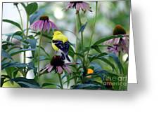 Goldfinch Visiting Coneflower Greeting Card