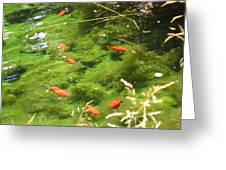 Goldfish In A Pond Greeting Card