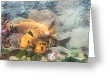 Goldfish In An Aquarium Greeting Card