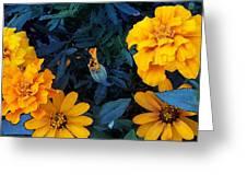 Goldies Greeting Card