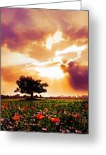 Golds At Sunset After The Rain Greeting Card