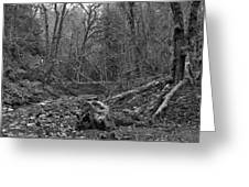 Goldstream Provincial Park Black And White Greeting Card