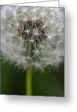 Gone To Seed - Color Greeting Card