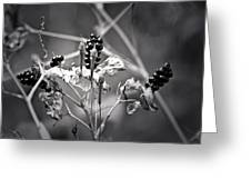 Gone To Seed Berries And Vines Greeting Card