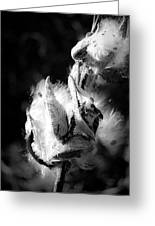 Gone To Seed Milkweed 1 Greeting Card