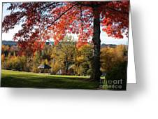 Gonzaga With Autumn Tree Canopy Greeting Card