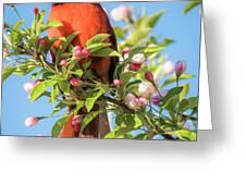 Good Morning Mr Cardinal  Greeting Card
