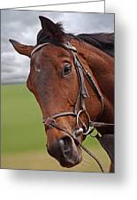 Good Morning - Racehorse On The Gallops Greeting Card