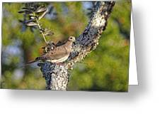 Good Mourning Dove By H H Photography Of Florida Greeting Card