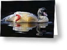 Goosander Greeting Card