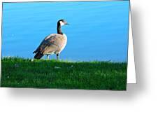 Goose #3 Pose Greeting Card