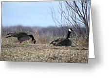 Goose And Gander Greeting Card