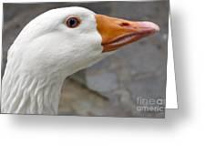 Goose Close Up Greeting Card