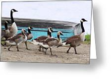 Goose Crossing Mayville Park Greeting Card