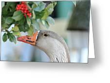 Goose Eating Berries Greeting Card