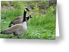 Goose Warning Greeting Card
