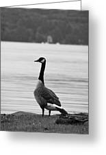 Goose In The Rain Greeting Card