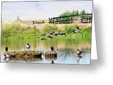 Goose Pond Greeting Card