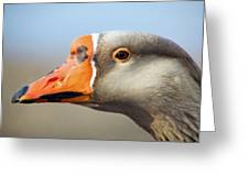 Goose Portrait Greeting Card