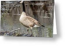 Goose Posing Greeting Card
