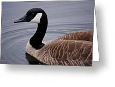 Goose Watching Me... Greeting Card