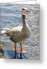 Goosey Goosey Gander... Greeting Card