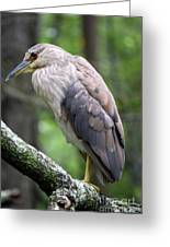 Gorgeous Bird Greeting Card