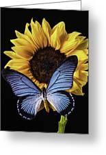 Gorgeous Blue Butterfly Greeting Card