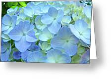 Gorgeous Blue Colorful Floral Art Hydrangea Flowers Baslee Troutman Greeting Card