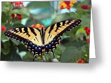 Gorgeous Butterfly Greeting Card