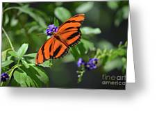 Gorgeous Close Up Of An Oak Tiger Butterfly In Nature Greeting Card