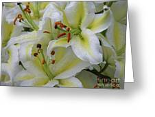 Gorgeous Cluster Of Blooming White Lilies In A Bouquet Greeting Card
