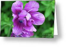 Gorgeous Flowering Purple Tulip Flower Blossoms In A Garden Greeting Card