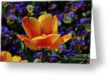 Gorgeous Flowering Yellow And Red Blooming Tulip Greeting Card