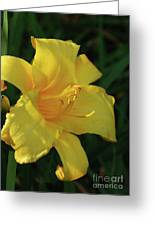 Gorgeous Flowering Yellow Daylily Blooming In A Garden Greeting Card