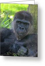 Gorgeous Gorilla Greeting Card