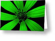 Gorgeous Green Greeting Card