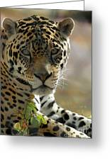 Gorgeous Jaguar Greeting Card by Sabrina L Ryan