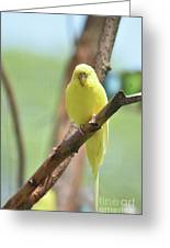 Gorgeous Little Yellow Parakeet Living In The Wild Greeting Card