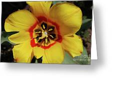Gorgeous Look At The Center Of A Yellow Tulip Greeting Card