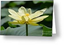 Gorgeous Lotus Flower Greeting Card