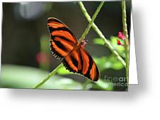 Gorgeous Orange And Black Oak Tiger Butterfly Greeting Card