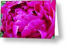 Gorgeous Pink Greeting Card