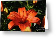 Gorgeous Pretty Orange Lily Flower Blooming In A Garden Greeting Card