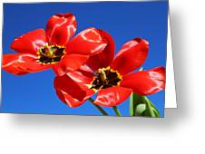Gorgeous Red Tulips. Greeting Card