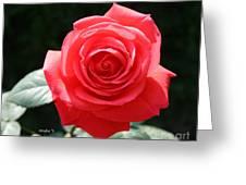 Gorgeous Rose Greeting Card
