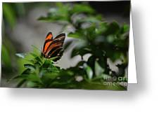 Gorgeous View Of An Oak Tiger Butterfly In The Spring Greeting Card