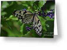 Gorgeous White Tree Nymph Butterfly With It's Wings Spread Greeting Card