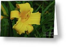Gorgeous Yellow Daylily In A Garden Blooming Greeting Card
